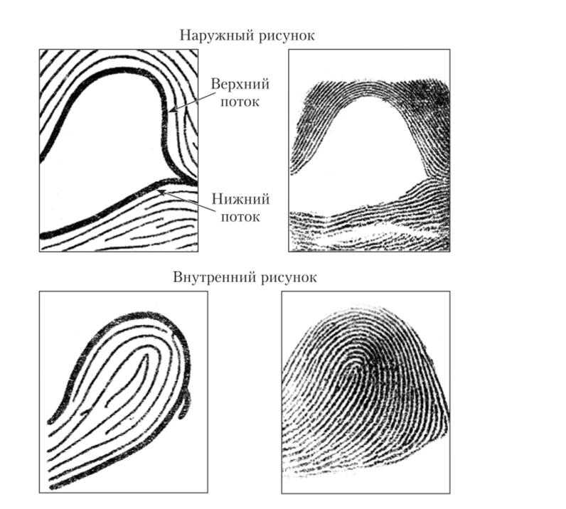 типы папиллярных узоров пальцев рук картинки поимки вируса, переустановил