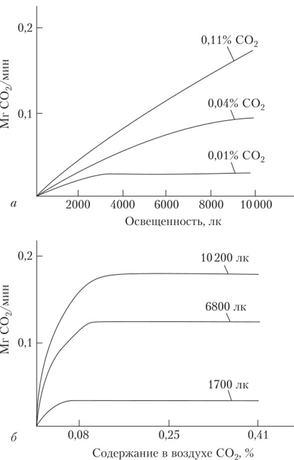 как зависит интенсивность фотосинтеза от освещения размера